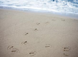 Bird tracks in sand of a beach.