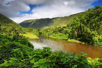 View of the river in Waipio Valley