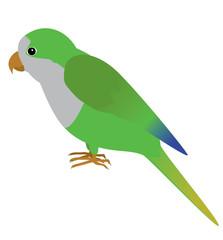 An illustration of a quaker parrot