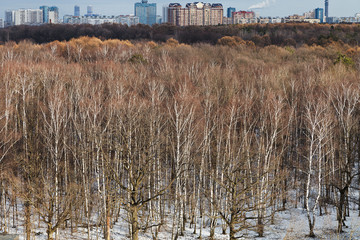cityscape with spring thawing in park