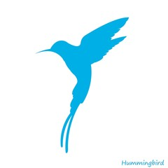 Blue hummingbird icon
