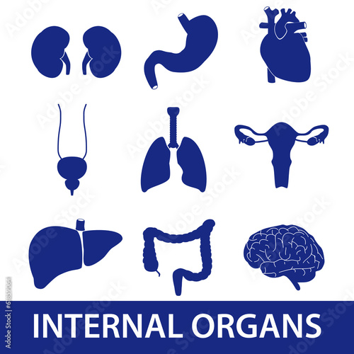 internal human body organs icons eps10