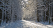 Forest ground road snow covered