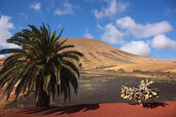 Fuerteventura, Canary Islands, Spain