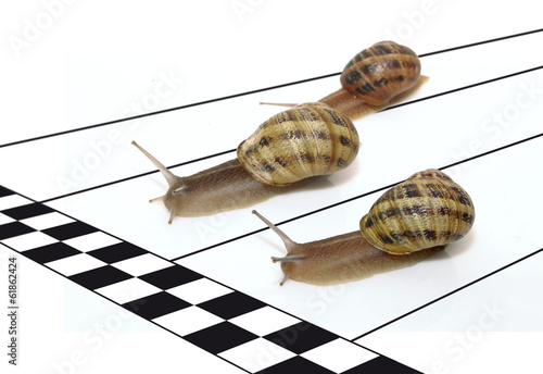 course d'escargots - 61862424