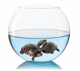 turtles in aquarium on a white background