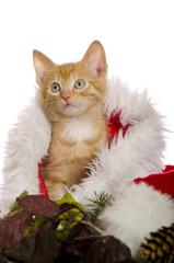 Katzenbaby in Weihnachtsmannmütze