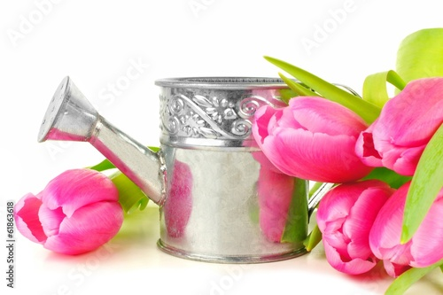Springtime watering can with vibrant tulip flowers