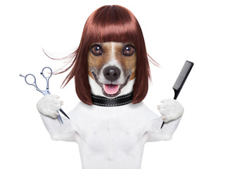 hairdresser dog