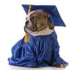 pet graduation