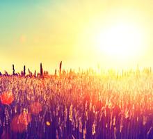 Pole. Krajobraz obszarów wiejskich w ramach Lśnienie Sunlight