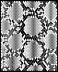 Illustration of gray skin of snake, vector