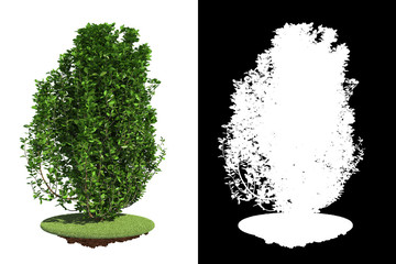 Isolated Green Bush with Detail Raster Mask.