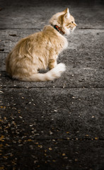 Dramatic High-Contrast Image of Ginger Cat Sitting on Concrete