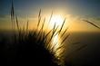 Esparto reeds