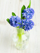 blue hyacinth in a glass vase on wooden surface
