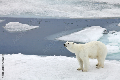 Fotobehang Ijsbeer Polar bear family in natural environment