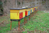 Row of Colourful Beehives