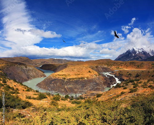 In the sky, floating giant Andean condor