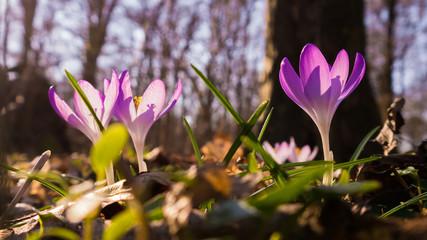 Frühlingsboten im Leipziger Auwald