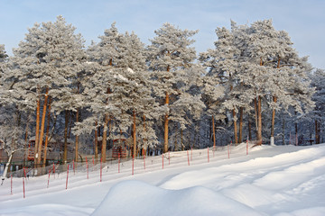 Amusement park with coniferous trees in winter