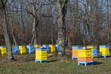 Beehives in Strandja Mountain