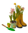 Yellow daffodils, pink hyacinth and rubber boots isolated