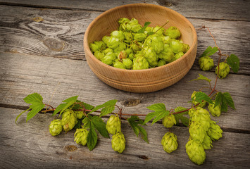 Harvest of hops