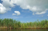 Swamp with sedge vegetation in the Danube Delta