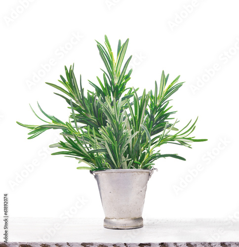 Rosemary in old metal bucket on white wooden table, isolated