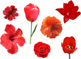 set of seven red flowers isolated on white