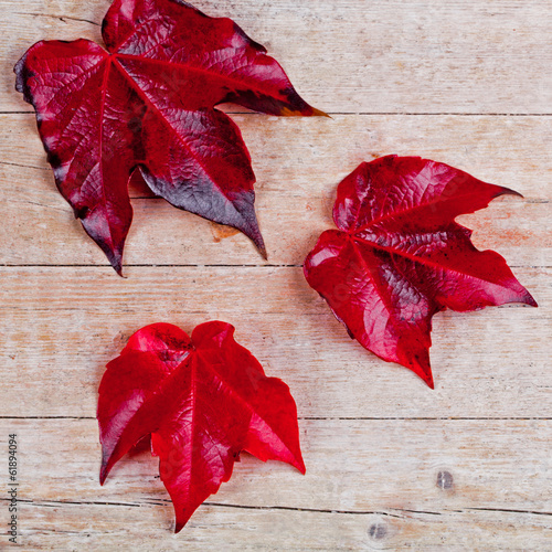 three red autumn leaves