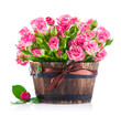 Bunch pink roses in pot. Isolated on white background
