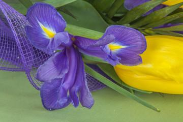 Весенние цветы крупным планом