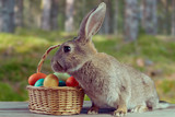 Easter bunny outdoor