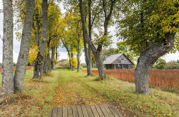 Old farm road among oak trees, Latvia