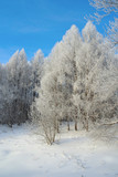 Beautiful winter landscape in forest