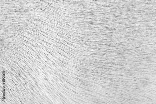 Foto op Plexiglas Wolf Close-up of dog fur