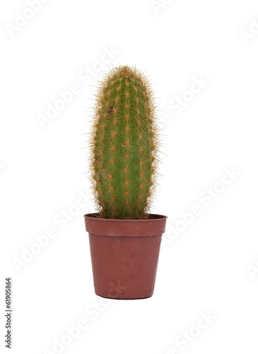Foto op Canvas Cactus Thorny cactus plant isolated