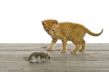 Zwei Freunde, eine kleine Katze spielt mit einer Maus