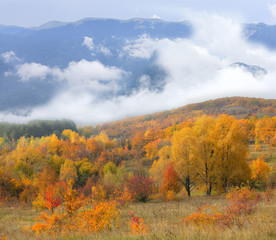 autumn forest on mountains background