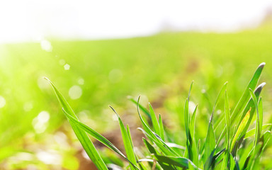 Frühlingssonne auf dem Feld