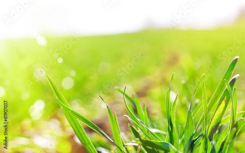 canvas print picture Frühlingssonne auf dem Feld