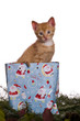 Katze als Geschenk in einer Tüt