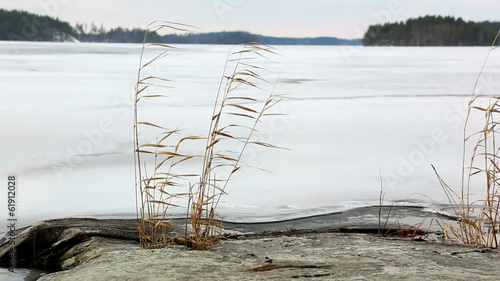 Reeds swaying in the winter breeze at rocky lakeside