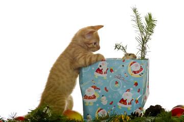 Katze bekommt eine Maus als Geschenk