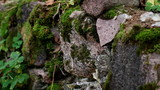 Rock stone wall covered in moss