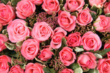 Group of Pink roses