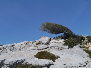 A tree on the top of a hill in the Kornati national park