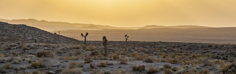 beautiful yucca plants in sunset in desert area